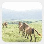 Horses running square stickers