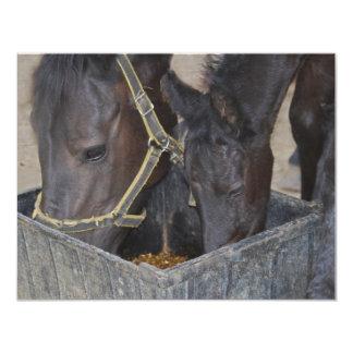 Horses sharing card