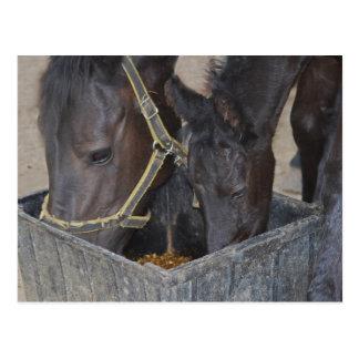 Horses sharing postcard