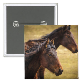 Horses Side By Side Pins