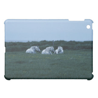 Horses sitting in field, Perci, Quebec, Canada iPad Mini Cover