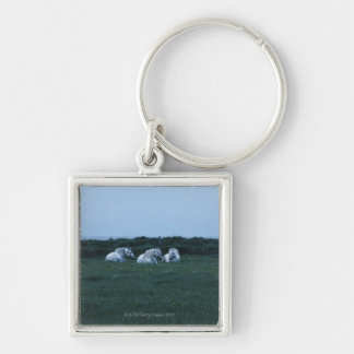 Horses sitting in field, Perci, Quebec, Canada Key Chains