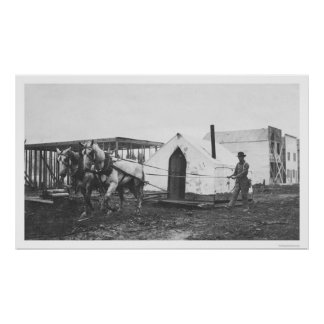 Horses Tent Anchorage 1916 Posters