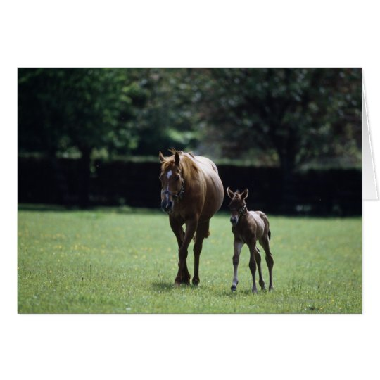 Horses - Thoroughbred, Mare And Foal, Card