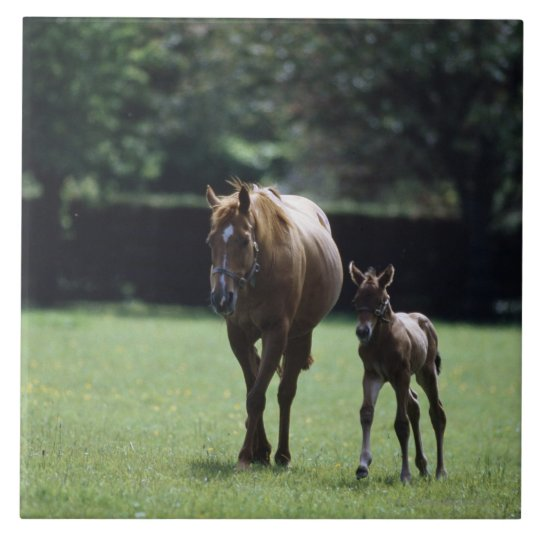 Horses - Thoroughbred, Mare And Foal, Ceramic Tile