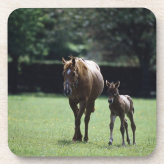 Horses - Thoroughbred, Mare And Foal, Drink Coaster