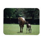 Horses - Thoroughbred, Mare And Foal, Magnets