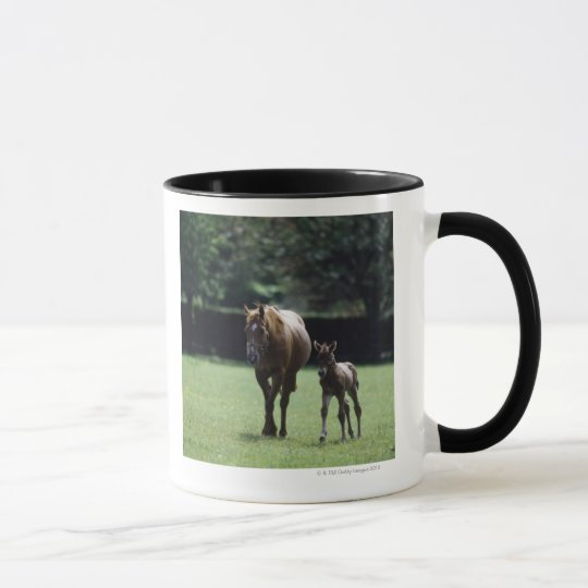 Horses - Thoroughbred, Mare And Foal, Mug