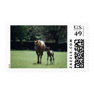 Horses - Thoroughbred, Mare And Foal, Postage