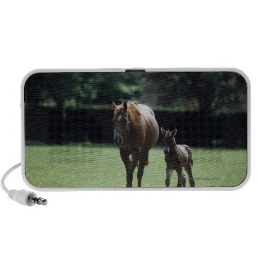 Horses - Thoroughbred, Mare And Foal, Notebook Speakers