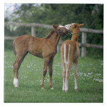 Horses - Thoroughbreds, Foals, Ceramic Tile