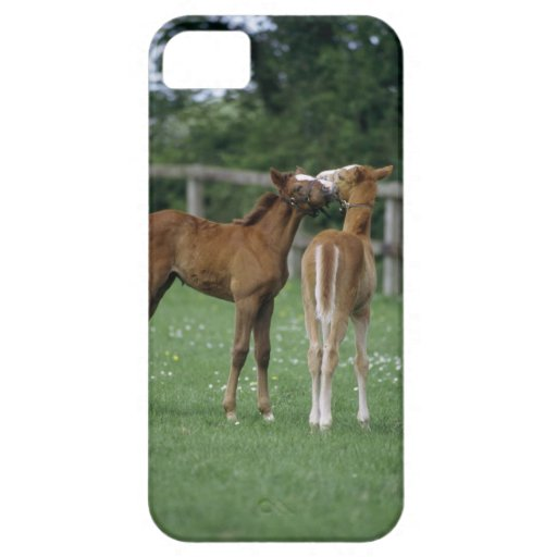 Horses - Thoroughbreds, Foals, iPhone SE/5/5s Case