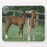 Horses - Thoroughbreds, Foals, Mouse Pad