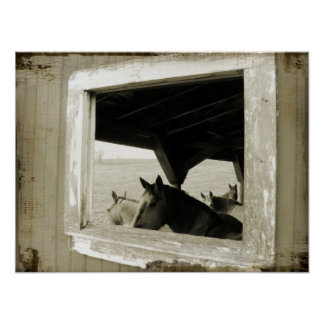 Horses Through A Barn Window Poster