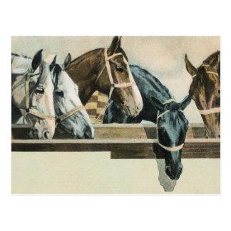 Horses Together postcard
