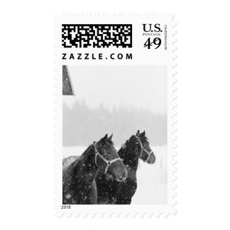 Horses USPS Christmas Card Postage Stamp 2014