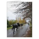 Horses walking down Oak Street in rain, Greyton, Cards