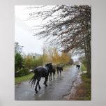 Horses walking down Oak Street in rain, Greyton, Poster