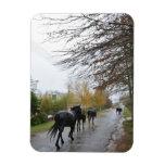 Horses walking down Oak Street in rain, Greyton, Flexible Magnet
