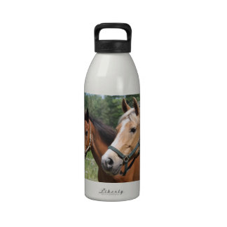Horses Drinking Bottles