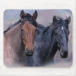 horse, horses, equine, equestrian, horse lover,
