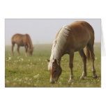 horses wildflower meadow morning mist Piano Card