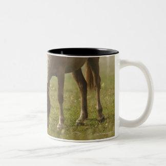 horses wildflower meadow morning mist Piano Two-Tone Coffee Mug
