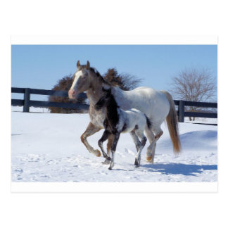 Horses Winter Snow Sports Country Farm Love Postcard