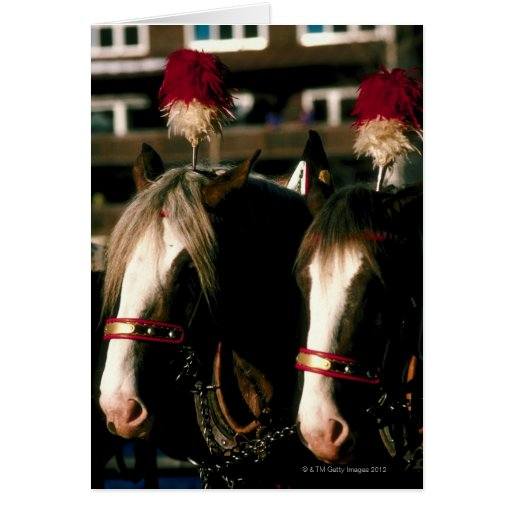 Horses with headdresses greeting cards