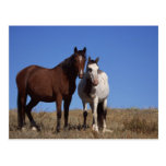 Horses with Sky Background Postcard