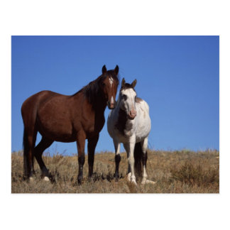 Horses with Sky Background Post Cards