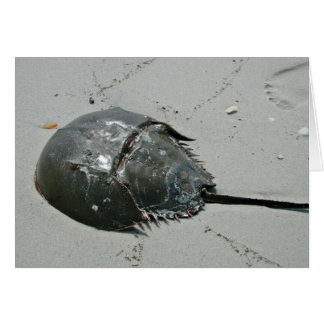 Horseshoe Crab Card