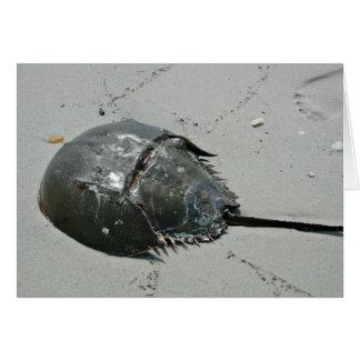 Horseshoe Crab Greeting Card