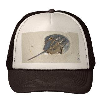Horseshoe Crab Hat