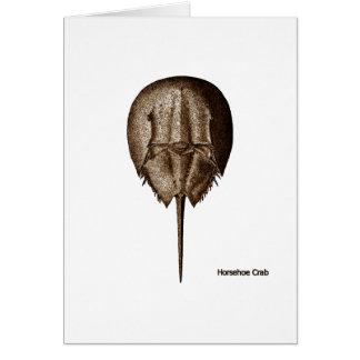 Horseshoe Crab Logo Cards
