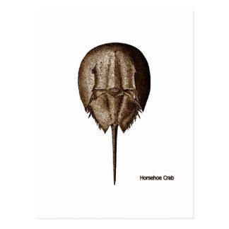 Horseshoe Crab Logo Post Cards