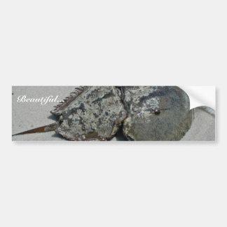 Horseshoe Crab - male Car Bumper Sticker
