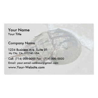 Horseshoe Crab - male Business Card Template