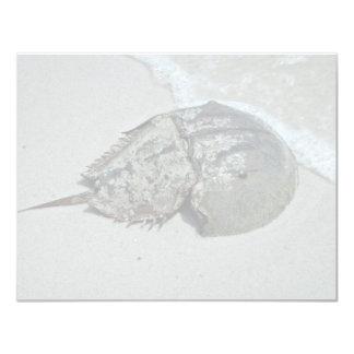 "Horseshoe Crab - male 4.25"" X 5.5"" Invitation Card"