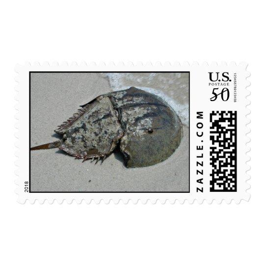 Horseshoe Crab - male Postage