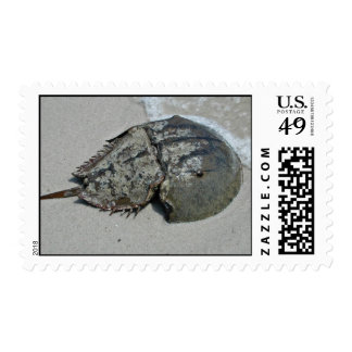 Horseshoe Crab - male Stamp