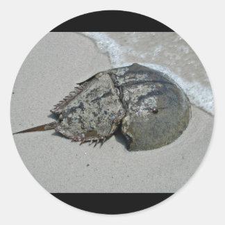Horseshoe Crab - male Round Sticker
