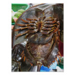 Horseshoe Crab Posters