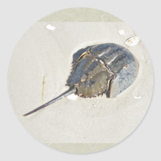 Horseshoe Crab Sticker