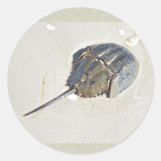 Horseshoe Crab Sticker