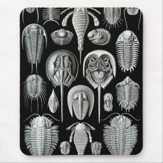 Horseshoe Crabs for Mice Mouse Pad