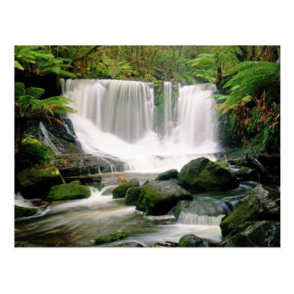 Horseshoe Falls Tasmania Australia Postcard