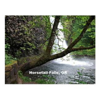 Horsetail Falls, Oregon, Columbia River Gorge Postcard