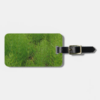 Horsetail Ferns Bag Tag