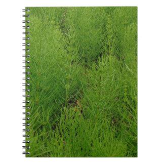 Horsetail Ferns Notebook